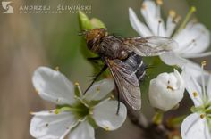 Fly on a flower.  #macrophotography #macro