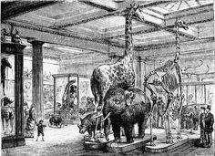 Mammalia Salon. British Museum