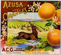 Azusa Stag Deer Orange Citrus Crate Label Art Print - California Citrus Fruit Crate Label Art Prints - Fruit and Vegetable Crate Label Art Prints Vintage Tin Signs, Vintage Labels, Vintage Ads, Vintage Posters, Vintage Banner, Vintage Food, Orange Crate Labels, Label Art, Vegetable Crates
