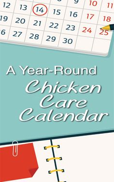 Chicken Care Calendar Backyard Poultry, Chickens Backyard, Keeping Chickens, Raising Chickens, Care Calendar, Chicken Breeds, Chicken Coops, Farms Living, Baby Chicks