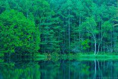 夏の絶景!御射鹿池(みしゃかいけ)は、茅野市 豊平奥蓼科にある美しい自然のスポットです。 木々の緑が水面に映ってとっても幻想的ですよね。 秋には、真っ赤に色付く紅葉も見応えがありますよ!!  このスポットはよくTV映像に使われてCMなどで目にした事があるという方も多い事でしょう。 また、画家の東山魁夷(ひがしやまかいい)も御射鹿池を題材に描いた作品を残しているんですよ。  ぜひぜひ緑豊かな御射鹿池に足を運んでみてください!