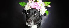 Labs and a couple of others - Gorgeous Photo Series Helps Often-Overlooked Black Dogs Get Adopted