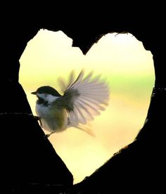 Sweet Angel #heart #valentine