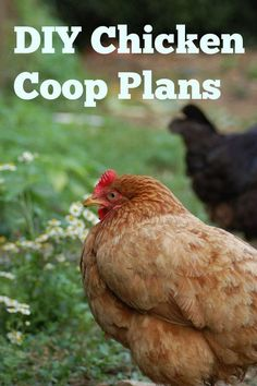 Your chicken coop is the biggest investment you will make when raising chickens, professional plans will ensure you are spending your money wisely!