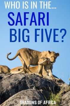 Want to spot the big five on your Africa safari? Here's how to spot lions, elephants and more on your safari trip in Africa! Rwanda Travel, Africa Travel, Ethiopia Travel, Responsible Travel, African Safari, Dog Friends, Travel Pictures, Elephants, Lions
