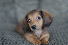 i want dis lil bugger!