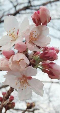 Beautiful Flowers Wallpapers, Beautiful Rose Flowers, Exotic Flowers, Pretty Flowers, Pink Flowers, Flower Aesthetic, Flower Pictures, Flower Wallpaper, Flower Art
