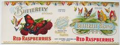 1920's Butterfly Red Raspberry Label