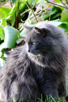 Cute Photo Of Cats That Find Comfort In Finding Warm Spots Kittens Cutest, Cats And Kittens, Cute Cats, Funny Cats, I Love Cats, Nebelung Cat, Angora Cats, Cat Fountain, Photo Chat