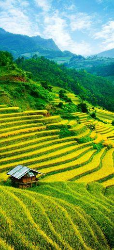 Rice fields on terraced of Mu Cang Chai, YenBai, Vietnam. 17 Unbelivably Photos Of Rice Fields. Stunning No. Laos, Beautiful World, Beautiful Places, Natur Wallpaper, Places Around The World, Around The Worlds, Landscape Photography, Nature Photography, Beau Site