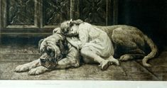 1905 English Mastiff by Herbert Thomas Dicksee