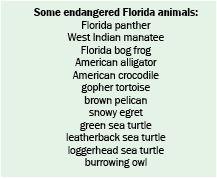Some Florida endangered species