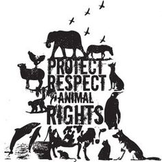 Protect, respect animal rights | follow @sophieeleana