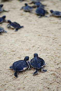 amo a todas las tortuguitas