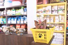 Gaia - Yorkshire - Inauguração do Pet Muito Pop    Ensaio Fotográfico Click Pets - Fotografia de Animais