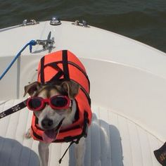 Mr. K is always ready for boating !