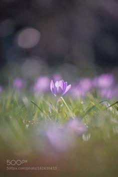 Bokeh Spring by Sebastian-Troeger-Photo #nature #photooftheday #amazing #picoftheday