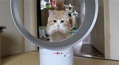 ダイソン羽根がなくて安心の扇風機。猫も狙いを決めて…