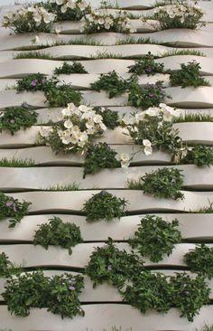 Establishing Vertical Gardens  // Great Gardens & Ideas //