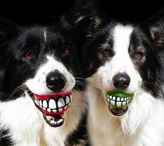 Fugindo do óbvio até na hora de brincar com o seu cão.