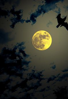 ✮ Full Moon Fly by
