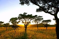 De Voetpadkloof in Loskopvalley, Mpumalanga, Middelburg offers Self-Catering camping, Safari Tent, Chalet and Log Cabin Accommodation. Logs, Resorts, Catering, Safari, Tent, Africa, Chalets, Cabin, Store