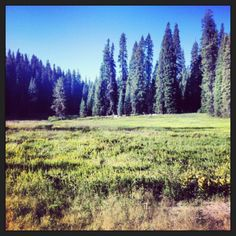 Walk amongst giants at #SequoiaNationalPark in beautiful #California #ForTheLoveOfWanderlust