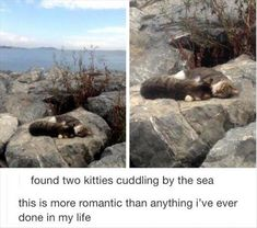 Kitty love by the seaside.