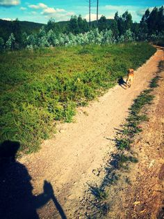 My dog and me, walking in the forest. Simple things... nice day in North of Portugal.