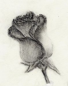 pencil drawing rose; Bleistiftzeichnung rose