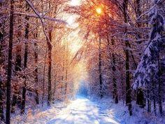 Imagenes - FONDITOS: Bosque en Invierno - Paisajes, Invierno