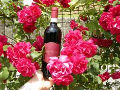 colours of flowers and good wines