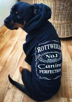 "Click visit site and Check out Best ""Rottweiler"" T-shirts. This website is top-n… Click visit site and Check out Best ""Rottweiler"" T-shirts. This website is top-notch. Tip: You can search ""your name"" or ""your favorite shirts"" at search bar on the top. Dog Training Videos, Training Your Puppy, Training Dogs, I Love Dogs, Cute Dogs, Positive Dog Training, Rottweiler Puppies, Dog Behavior, Dog Life"