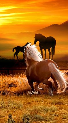 All The Pretty Horses, Beautiful Horses, Animals Beautiful, Beautiful Things, Horse Photography, People Photography, Miniature Ponies, Majestic Horse, Horses And Dogs