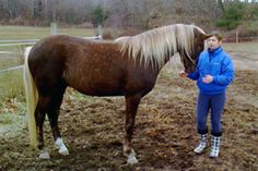 "Donnerheart ""Rocky""  1/2 swedish warmblood 1/2 rocky mountain horse  brookstonefarms.com"