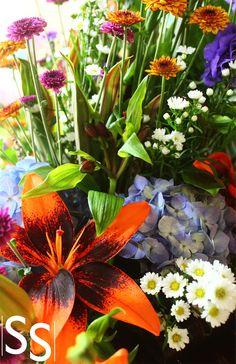 Flores de colore brillantes/Colorful Flowers
