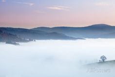 Single Tree in a Foggy Landscape Photographic Print by Markus Lange at AllPosters.com