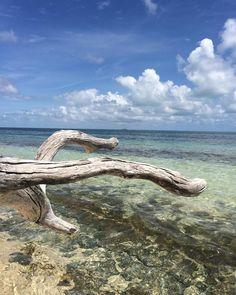Just Green Island   #nofilters #merrychristmas #summer  #endlesssummer #blue #blu #skyporn #wanderlust #horizon #nature #greatbarrierreef #sea #traveller #traveldiaries #catalanspelmon #arroundtheworld #farfromhome #naturelovers #greenisland #green #ocean #marine #chilling #calm #hapiness #aussie #australia #straya #downunder by sarunghi http://ift.tt/1UokkV2