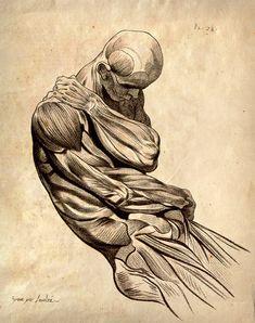 My FAV!!!!! 11x14 Vintage Anatomy. Muscle Sketch Human Body. Science - 009. $15.00, via Etsy.
