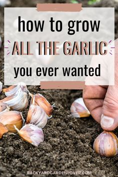 Resistant to disease, and delicious in cooking, garlic is easy to grow and resistant to diseases! See the few things you need to keep in mind when planting garlic and learn how to preserve it for later. Backyard Vegetable Gardens, Fruit Garden, Garden Seeds, Garden Plants, Easy Vegetables To Grow, Growing Veggies, Gardening Vegetables, Gardening For Beginners, Gardening Tips