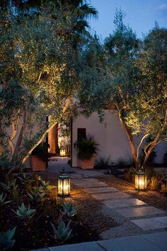 Comment planter un olivier en pot ou en pleine terre? Fiche et faits curieux - Backyard Lighting, Outdoor Lighting, Pathway Lighting, Path Lights, Entry Lighting, Ceiling Lighting, Lights In Trees, Garden Lighting Ideas, Lighting Cable