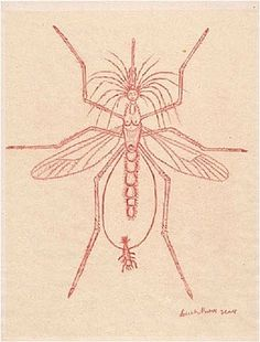 Mosquito by Louise Bourgeois. Colored pencil on paper, 1999.