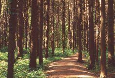 East Woods in Summer at The Morton Arboretum, Illinois #nature #woods