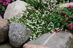 Add ROCKS AND BOULDERS into your landscaping plan and plant flowers and bulbs in the crevices.  This will bring hardscaping and softscaping features together, providing a nice balance.