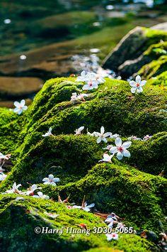 Montana, Hakka Flower, Sijhih City, Taipei County, Taiwan