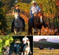 horseback rides through vineyards at kunde family estate winery in sonoma valley