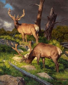"""'A Time of Plenty' by Dustin Van Wechel Wildlife Paintings, Wildlife Art, Animal Paintings, Animal Drawings, Horse Drawings, Moose Pictures, Hunting Art, Eagle Art, Deer Art"