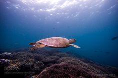 Turtle Paradise by christopherahailey #nature #photooftheday #amazing #picoftheday #sea #underwater