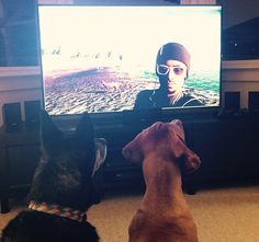 2 dogs watching Watch Dogs 2 dogs