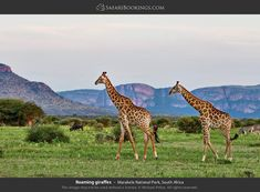 Traveling to Marakele National Park? Use our FREE travel guide and safari reviews to learn about Marakele's wildlife, best time to visit, climate and more! Weather And Climate, Large Animals, African Safari, Mountain Landscape, Free Travel, Travel Guide, National Parks, Wildlife, Map